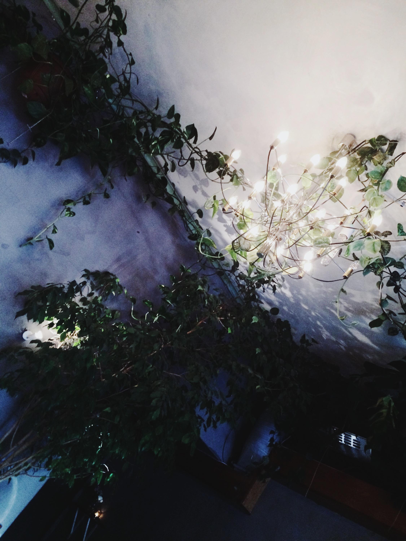 Torggata Botaniske